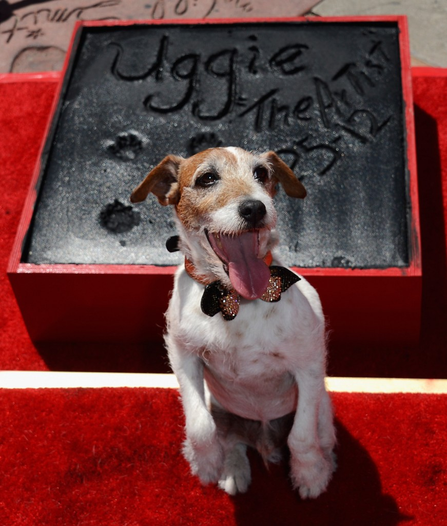 Uggie the dog, star of The Artist (2011), marks his retirement at a ceremony outside Grauman's Chinese Theatre, June 25, 2012 - Brenton Film