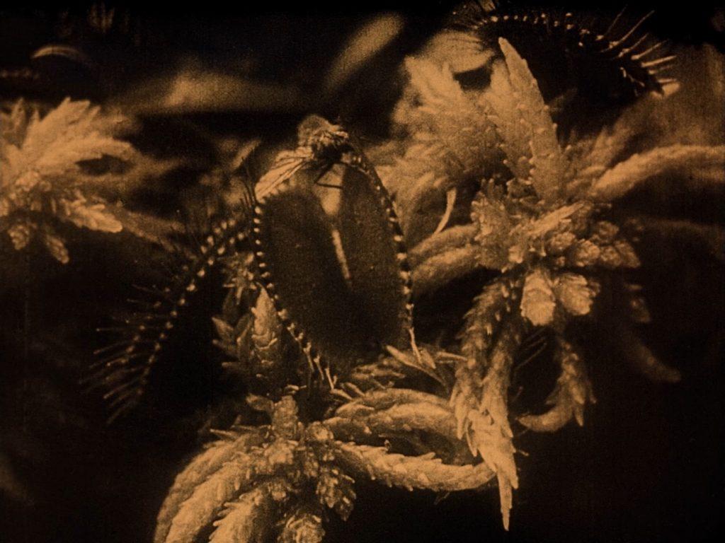 Venus flytrap and imminent victim. UK BFI Blu-ray.