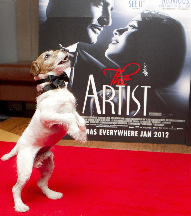 Uggie the dog, star of The Artist (2011) in front of a standee for the film
