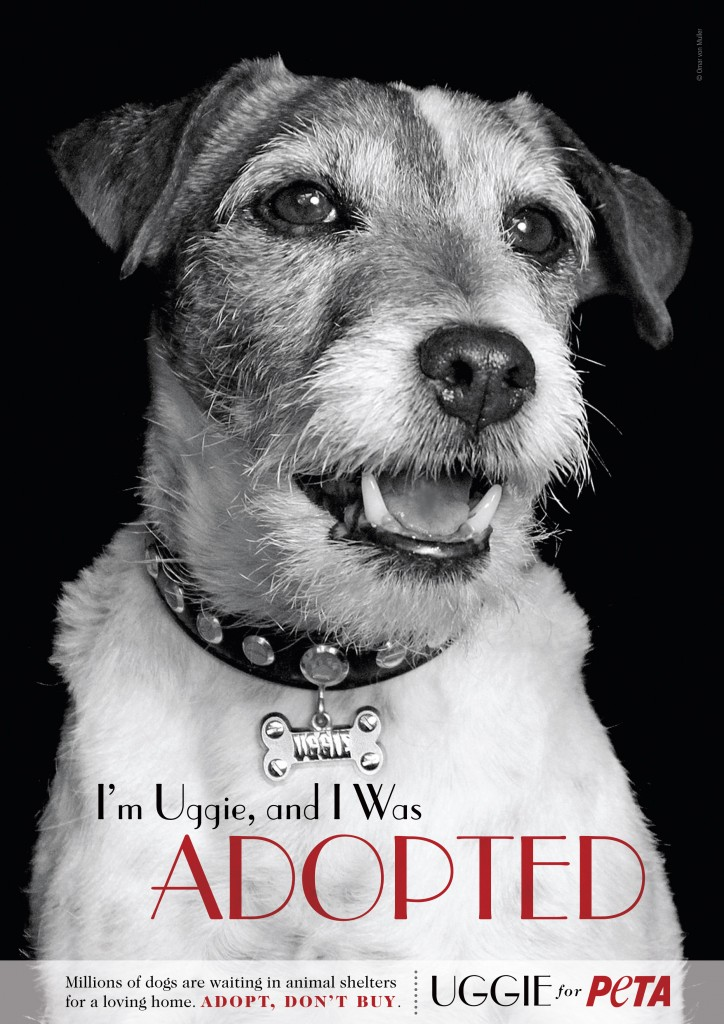 Uggie the dog, star of The Artist (2011) in PeTA animal adoption advert
