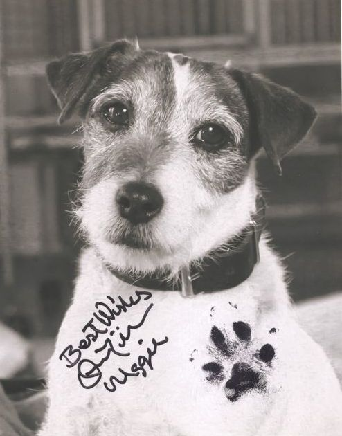 Uggie the dog, star of The Artist (2011) pawtographed pawtrait